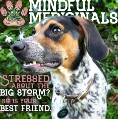 Mindful Medicinals CBD oil drops for pets